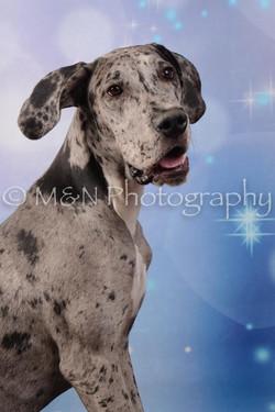 M&N Photography -DSC_6833