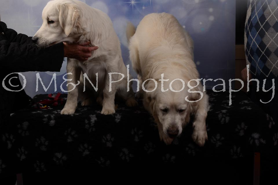 M&N Photography -DSC_7104