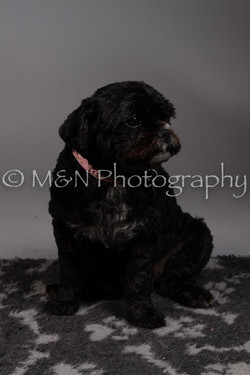 M&N Photography -DSC_2334
