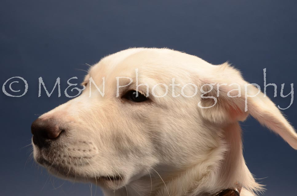 M&N Photography -DSC_4394