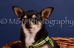M&N Photography -IMG_4501