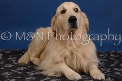 M&N Photography -DSC_5279