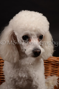 M&N Photography -DSC_9980
