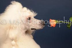 M&N Photography -DSC_3944