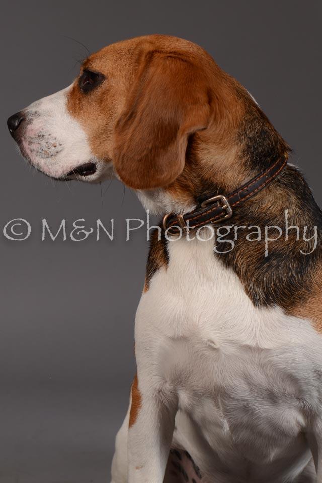 M&N Photography -DSC_2353