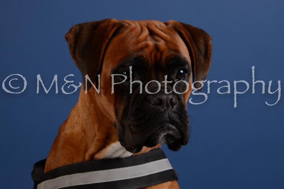 M&N Photography -DSC_5253