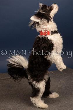 M&N Photography -DSC_4461