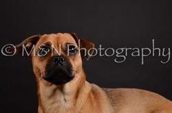 M&N Photography -DSC_5463