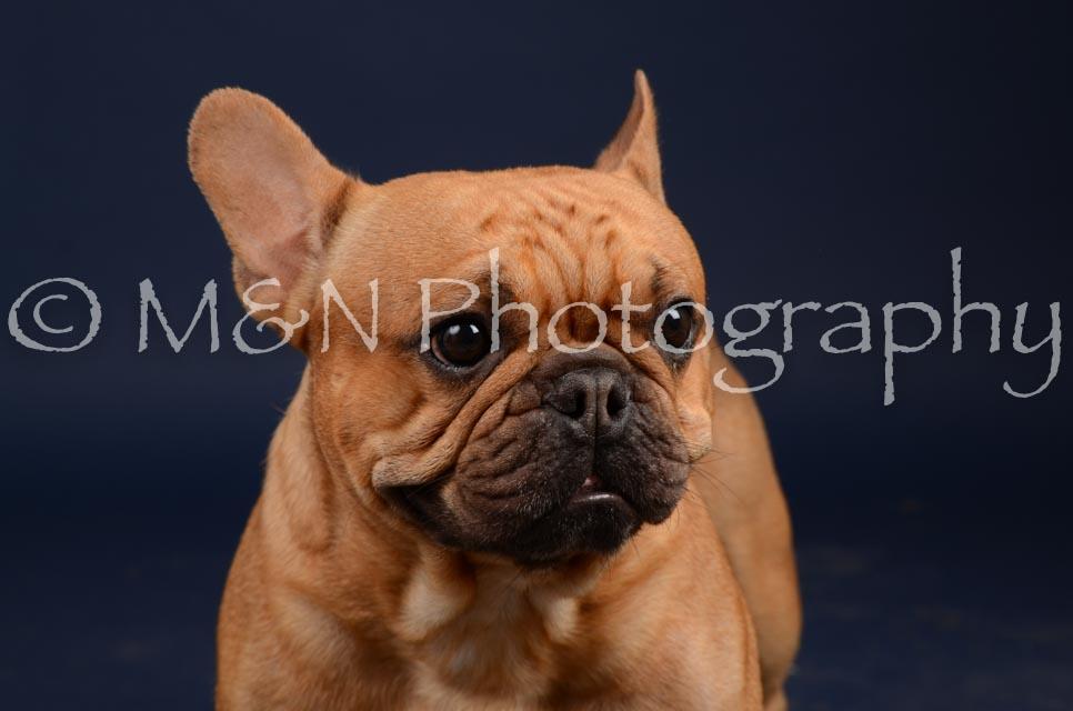 M&N Photography -DSC_0609
