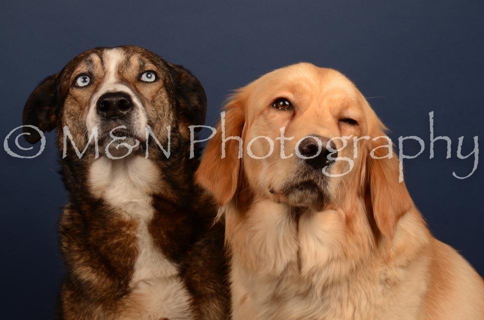 M&N Photography -DSC_4693