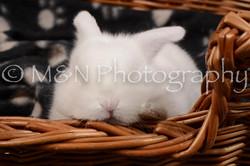 M&N Photography -DSC_1686