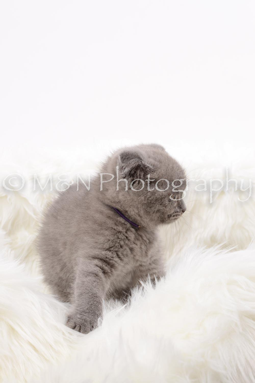 M&N Photography -DSC_8827