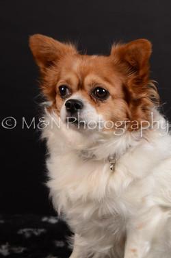 M&N Photography -DSC_5966