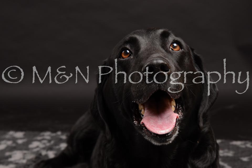 M&N Photography -DSC_0031