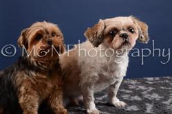 M&N Photography -DSC_4003