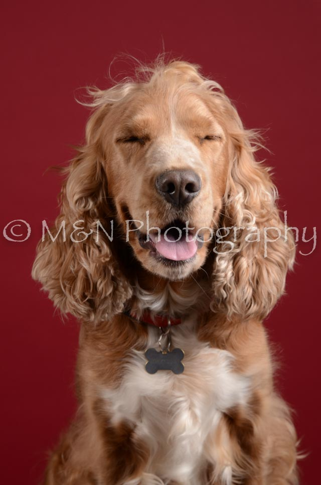 M&N Photography -DSC_3222