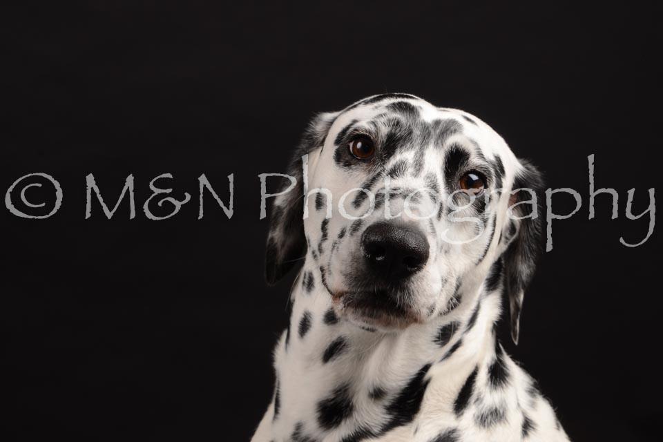 M&N Photography -DSC_9622