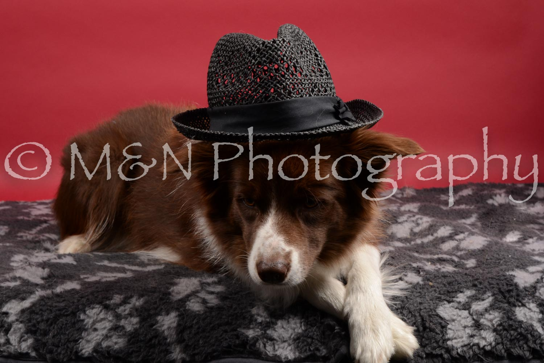 M&N Photography -DSC_8518