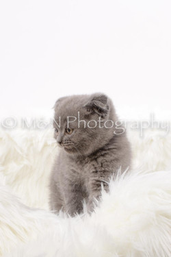 M&N Photography -DSC_8828