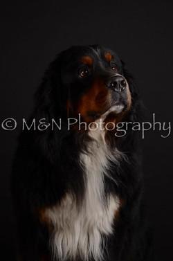 M&N Photography -DSC_5707