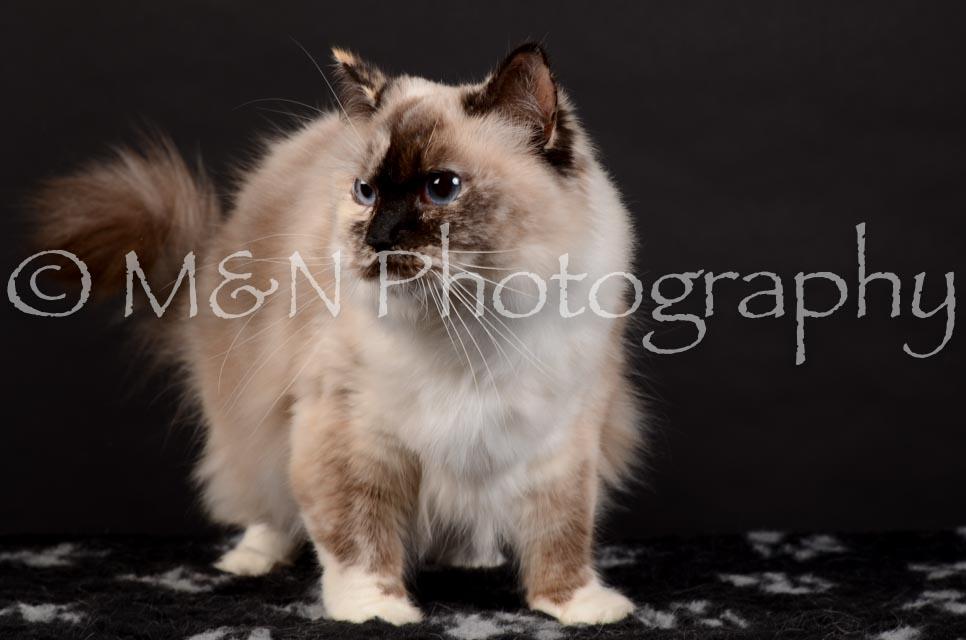M&N Photography -DSC_5561