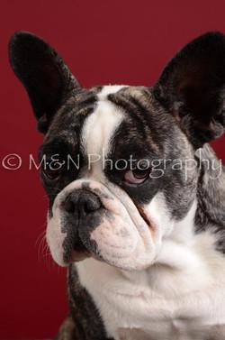M&N Photography -DSC_3680