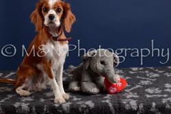 M&N Photography -DSC_4044