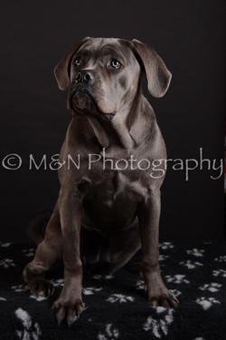 M&N Photography -DSC_5581