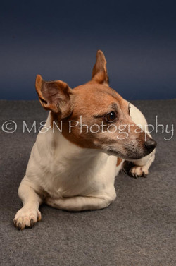 M&N Photography -DSC_4595