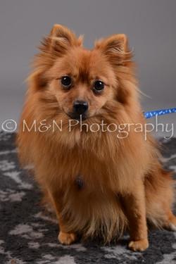 M&N Photography -DSC_2439