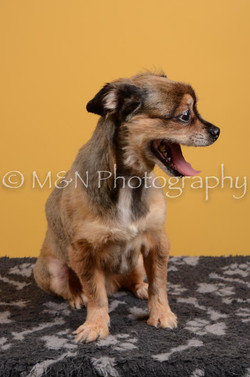 M&N Photography -DSC_4679