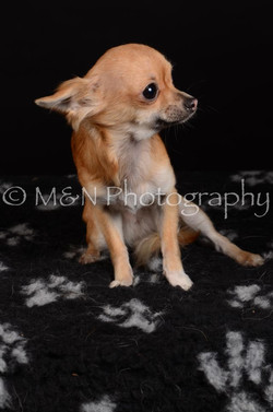M&N Photography -DSC_5758