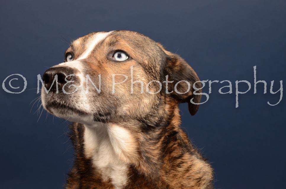 M&N Photography -DSC_4511