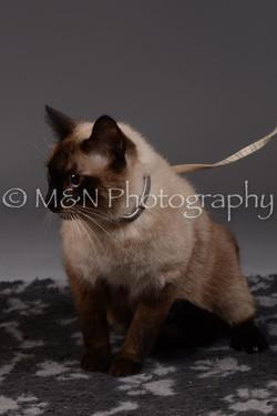 M&N Photography -DSC_2253