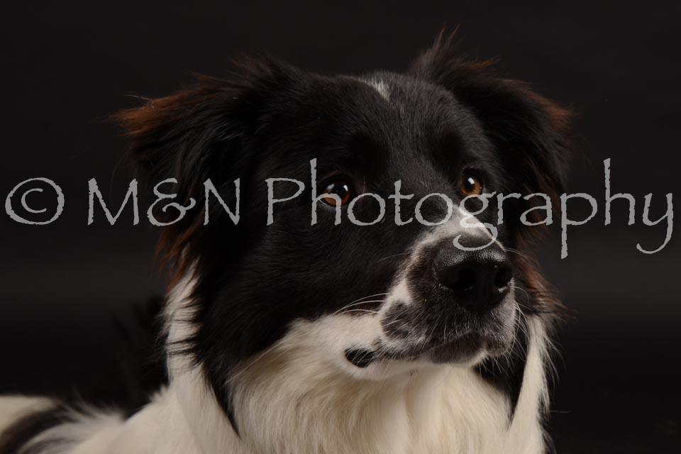 M&N Photography -DSC_9733