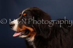 M&N Photography -DSC_3782