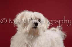 M&N Photography -DSC_3281