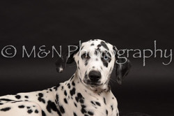 M&N Photography -DSC_9760
