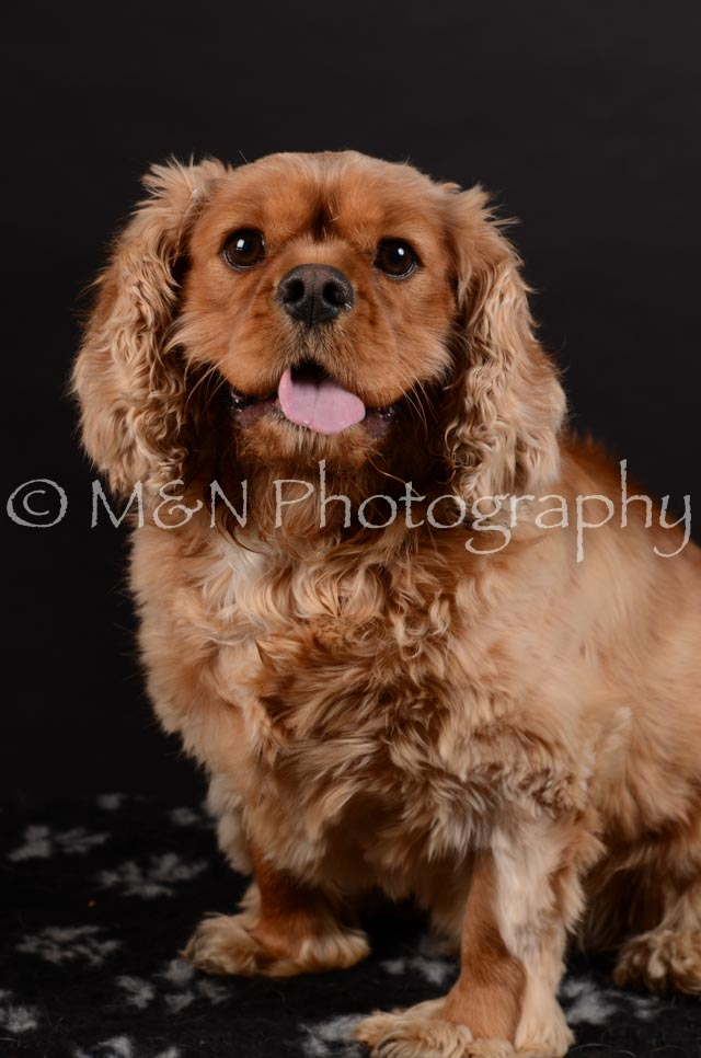 M&N Photography -DSC_5954