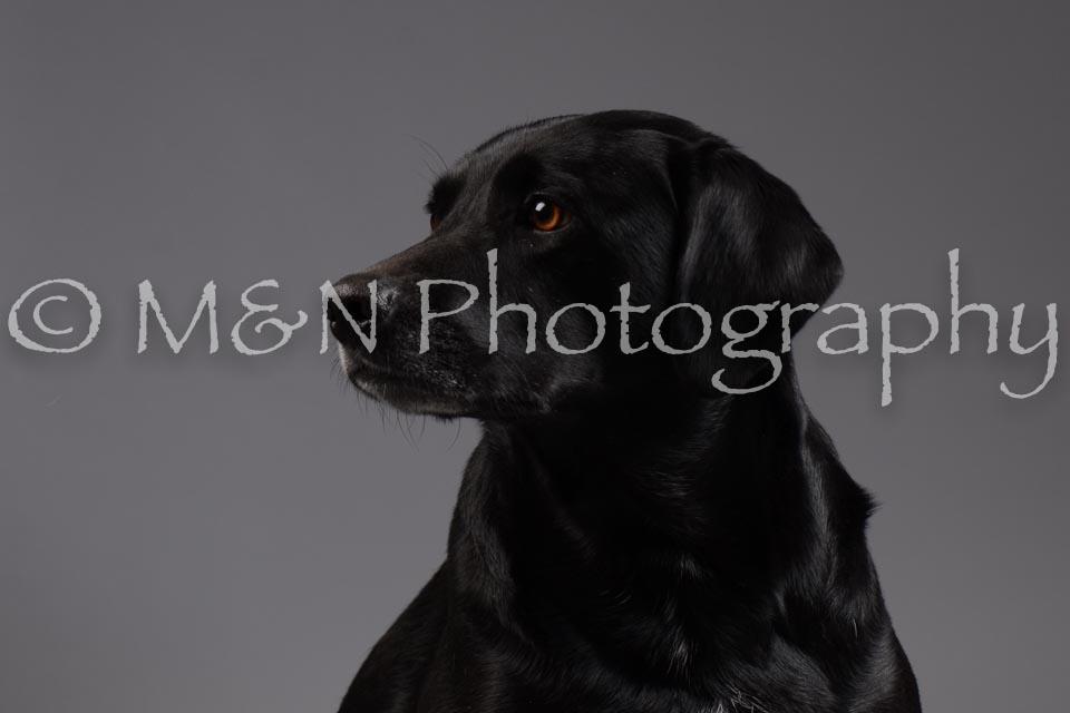 M&N Photography -DSC_2024