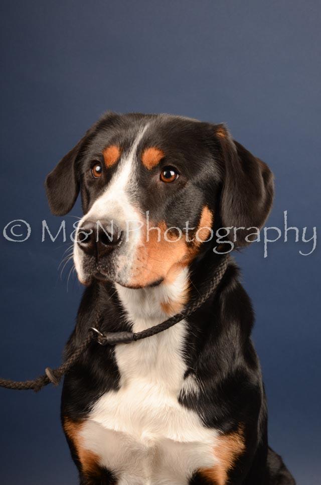 M&N Photography -DSC_4421