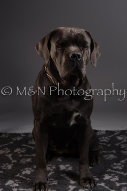 M&N Photography -DSC_2169