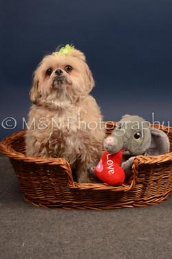 M&N Photography -DSC_4486