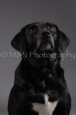 M&N Photography -DSC_2033
