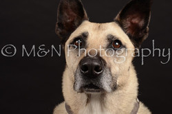 M&N Photography -DSC_9744