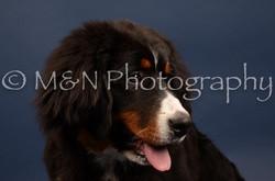 M&N Photography -DSC_3784