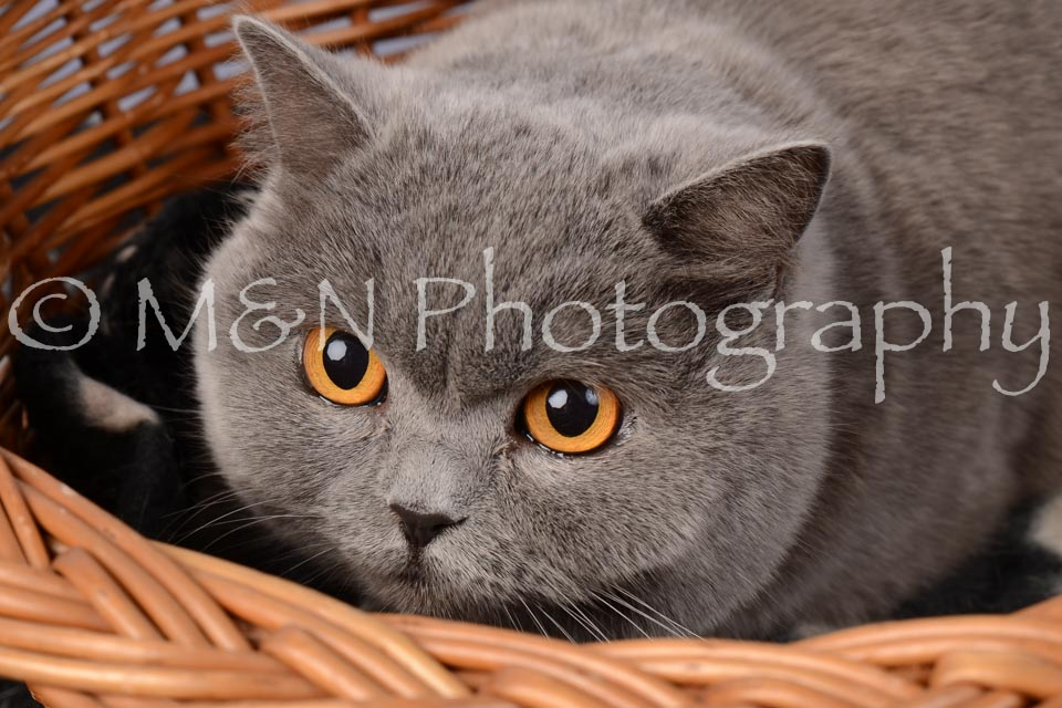 M&N Photography -DSC_6844