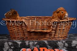 M&N Photography -DSC_5089
