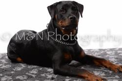 M&N Photography -DSC_8907