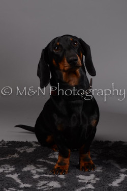 M&N Photography -DSC_1517